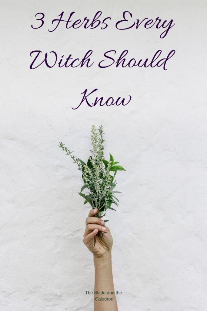 3 Herbs Every Witch Should Know #witchcraft #Herbs #Wicca