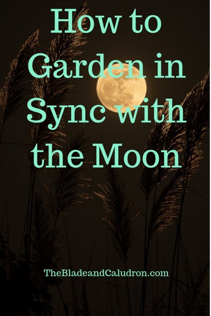 How to Garden in Sync with the Moon